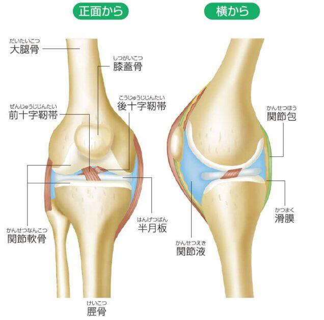 市川市-膝痛